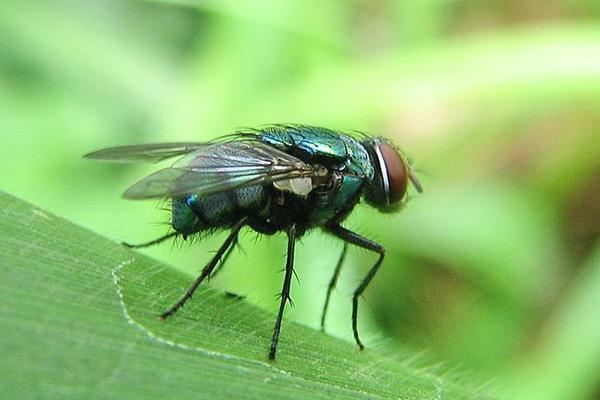 20 mẹo nhỏ dưới đây sẽ giúp bạn quét sạch bóng lũ ruồi đáng ghét