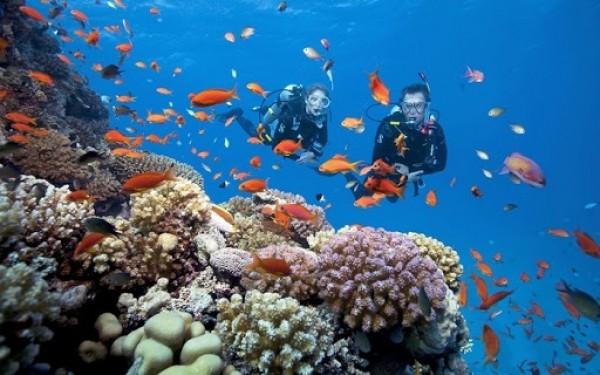 4 Lưu ý khi đi lặn biển ngắm san hô ở Nha Trang
