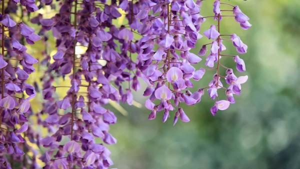 7 loại cây giúp nhà mát lịm dù trời nóng