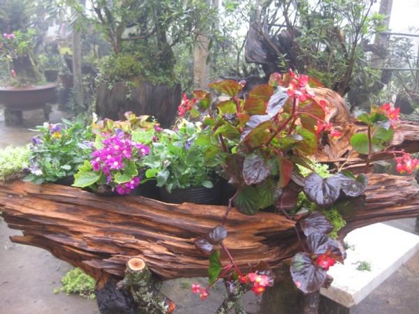 Bài trí một con thuyền hoa trong sân vườn