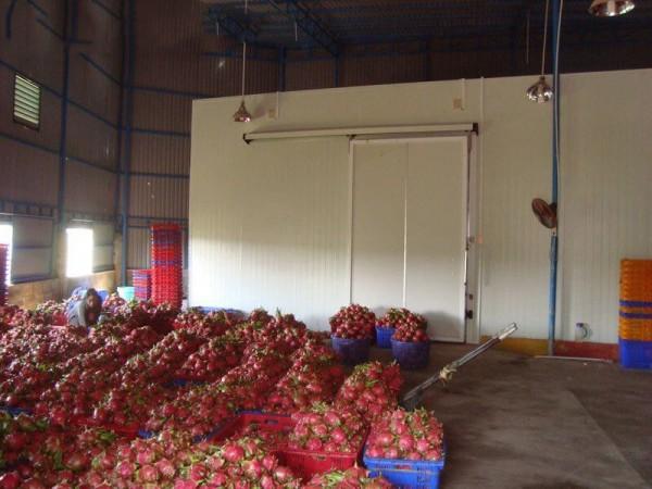 Bán kho lạnh trữ rau củ quả Tại Bình Thuận-Làm kho lạnh trữ Thanh Long 0947459479