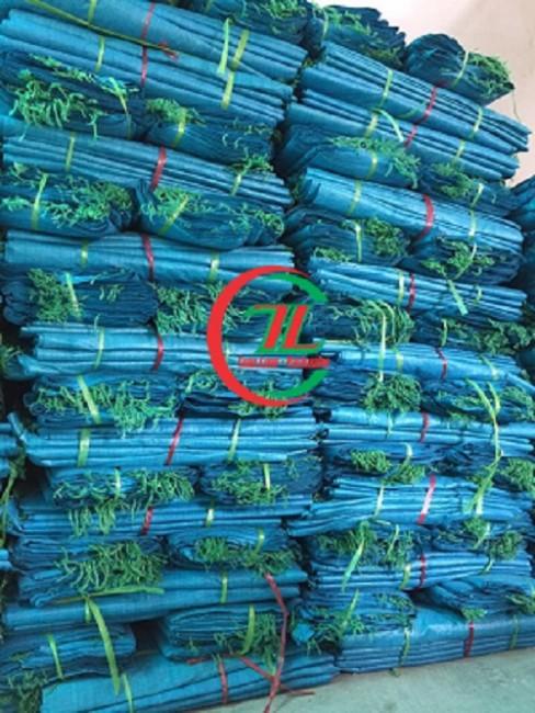Bao tải dứa màu xanh, xưởng sản xuất bao tải dứa xanh - 0908.858.386
