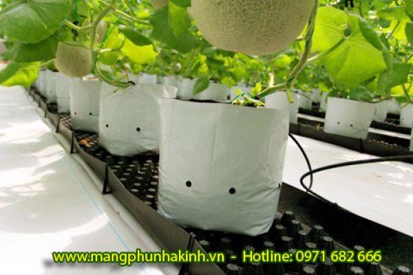 Bạt địa dùng cho nhà kính nhà lưới, bạt trải nông nghiệp, bạt địa nông nghiệp tại Hà Nội