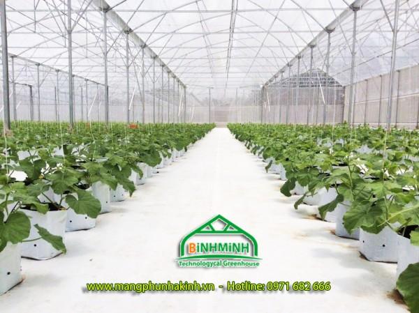 Bạt trải nền nhà màng, nhà kinh, bạt địa nông nghiệp, bạt trải nên giá rẻ tại Hà Nội