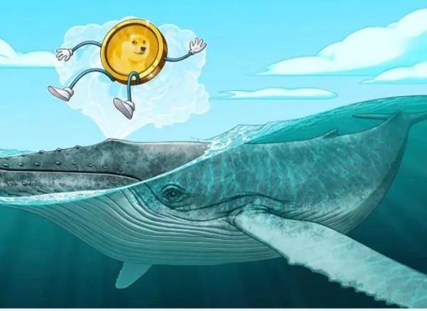 Bị nghi ngờ là cá voi Dogecoin, Elon Musk nói gì?