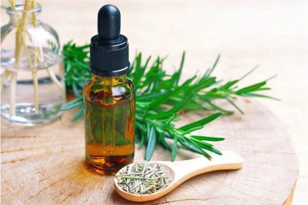 Bí quyết làm tinh dầu hương thảo tươi và khô