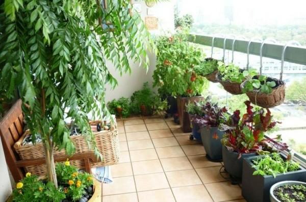 Bí quyết trồng rau trong diện tích hẹp