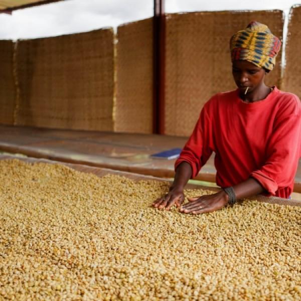 Cà phê ở Rwanda nên tìm hiểu