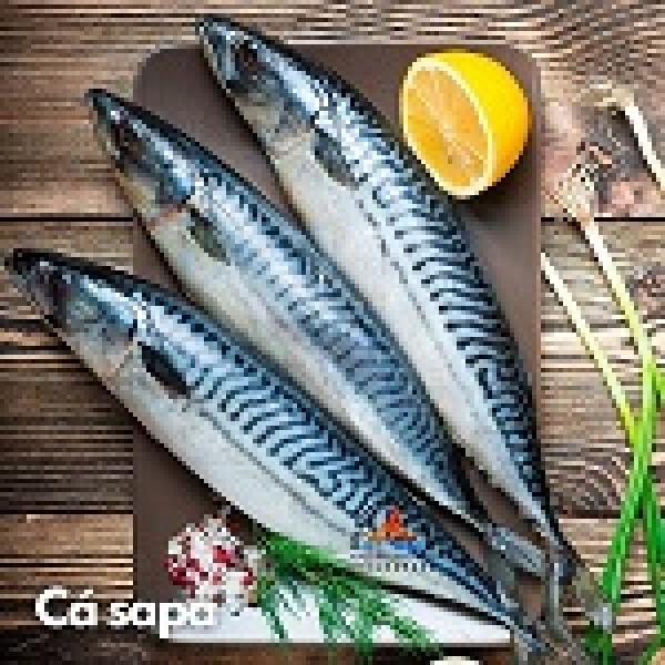 Cá Sa Ba Nhật Bản mua ở đâu?