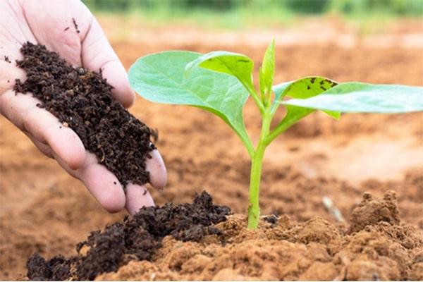 Cách tự sản xuất phân hữu cơ từ chính rác sinh hoạt
