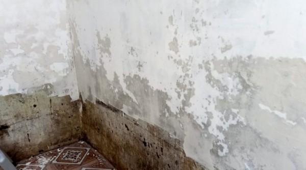 Cách xử lý trần nhà tường nhà bị ẩm mốc hiệu quả