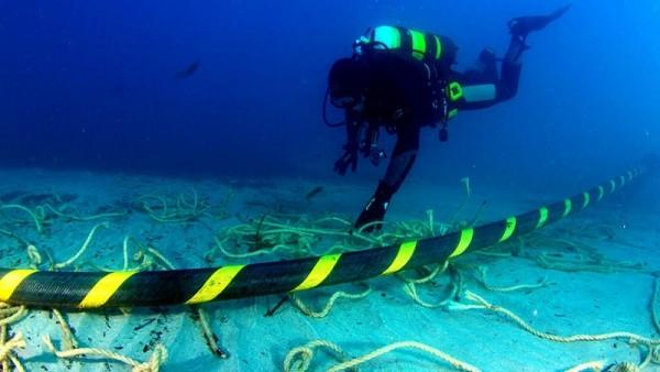 Cáp quang gặp vấn đề có phải do cá mập?