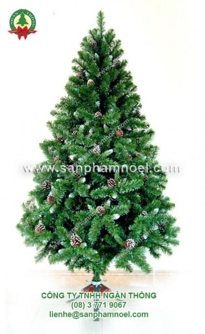 cây thông xanh 0.9m -1.2m-1.5m-1.8m-2.1m-2.4m-3m-4.5m-6m