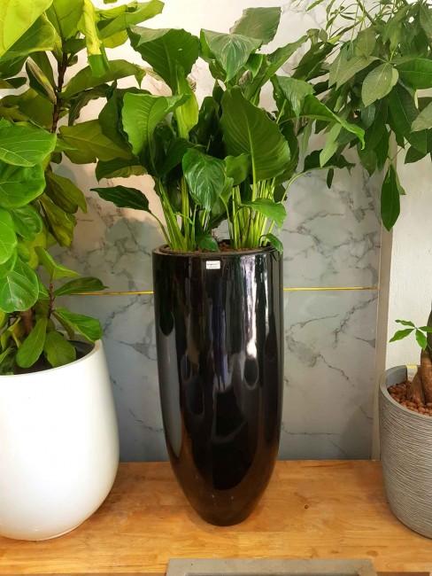 Chia sẻ mẫu chậu cây trồng Composite phù hợp cho nhà bạn