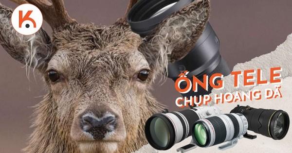 Chọn ống kính tele chụp động vật hoang dã nào tốt nhất?
