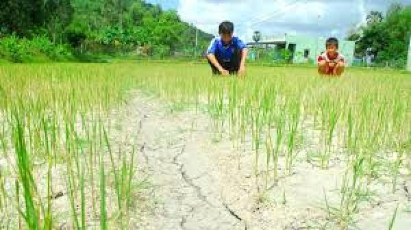 Chống chịu khí hậu tổng hợp và sinh kế bền vững Đồng bằng sông Cửu Long