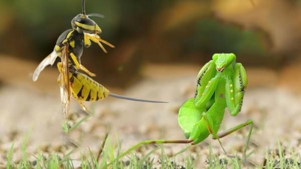 Có ai từng nghĩ ăn côn trùng sẽ tốt cho môi trường chưa?