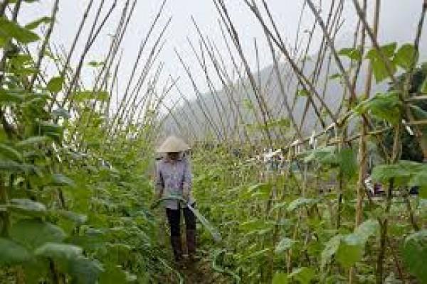 Công nghệ xanh bền vững đã được đưa vào nhà văn hóa thôn