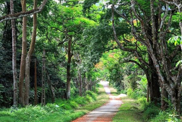 Cùng Cúc Phương Resort trở về với thiên nhiên