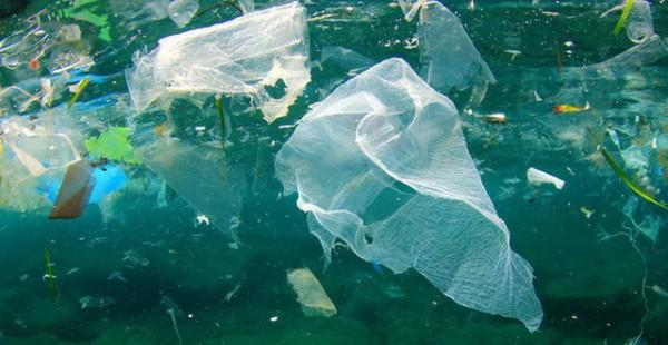 Cùng tìm hiểu rõ về vấn đề nhiễm độc nhựa