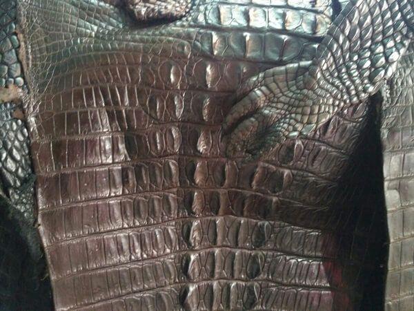 Da cá sấu dùng làm thắt lưng luôn được ưa chuộng