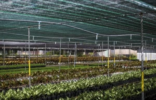Đại lý cung cấp lưới che nắng thai lan tại hà nôi, nhà phân phối lưới che nắng thái lan, đài loan