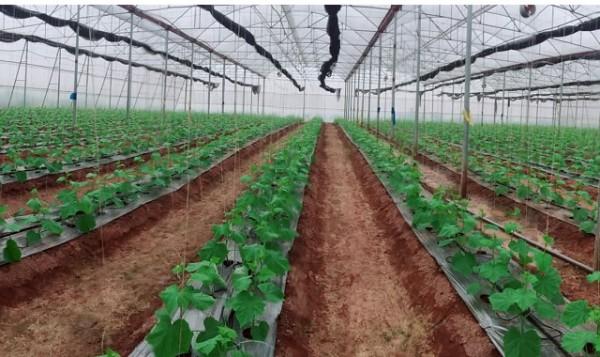 Đẩy mạnh ứng dụng khoa học kỹ thuật, công nghệ vào sản xuất rau
