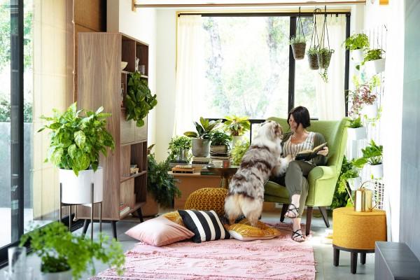 Điều ngạc nhiên là không khí trong nhà lại ô nhiễm hơn bên ngoài