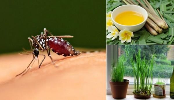 Dùng xà phòng kết hợp với giấm để diệt côn trùng