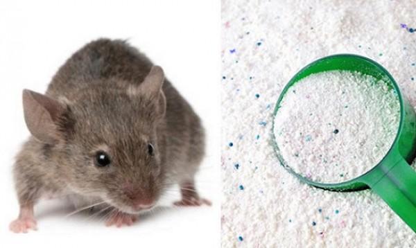 Đuổi lũ chuột đáng ghét ra ngoài vô cùng đơn giản
