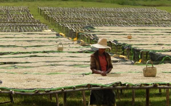 Ethiopia xứ sở cà phê nhiều người chưa biết