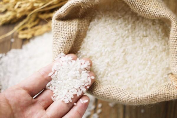 Gạo ST25 đặc sản Sóc Trăng có gì đặc biệt