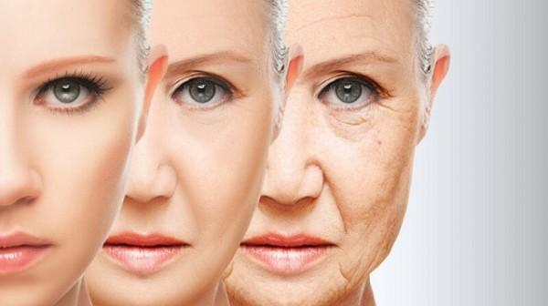 Giả thuyết chính xác nhất giải thích quá trình lão hóa