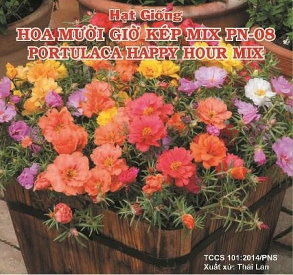 Hạt giống hoa mười giờ kép mix nhiều màu Phú Nông PN