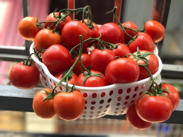 Học cách bảo quản cà chua sử dụng được cả năm