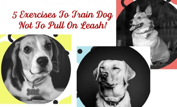How To Get Dog Listen – End Poor Recall Response!