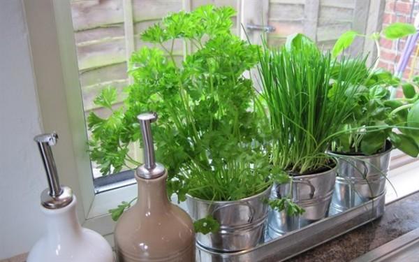 Hướng dẫn trồng cây gia vị tại căn bếp nhà bạn