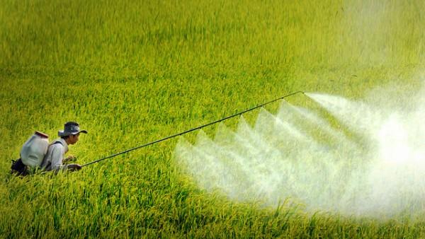 Không ít nông dân Việt vốn hay lạm dụng thuốc trừ sâu