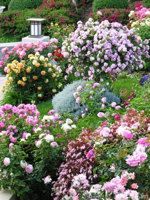 Khu vườn sáng bừng với những sắc màu rực rỡ