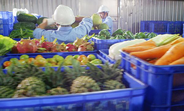 Lắp đặt kho lạnh sử dụng bảo quản trái Dứa