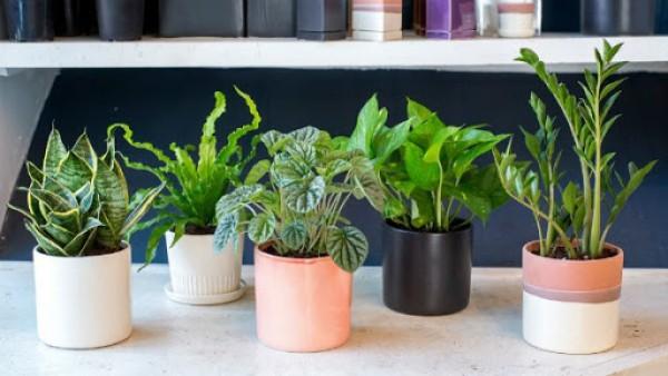 Lọc không khí với những loại cây cảnh trồng trong vườn