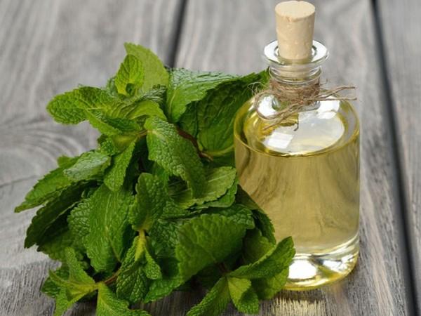 Lợi ích đối với sức khỏe của tinh dầu bạc hà