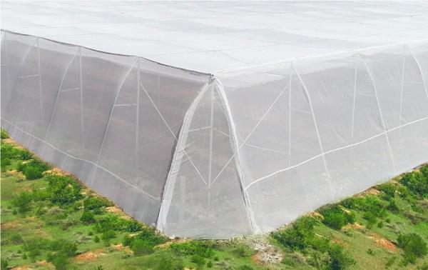 Lưới chắn côn trùng israel, lưới chống côn trùng làm nhà kính trồng rau,