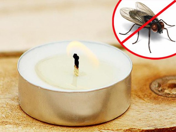 Mách bạn mẹo hay giúp đuổi ruồi hiệu quả