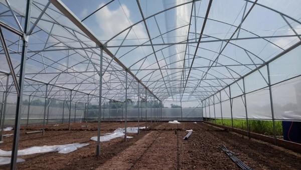Màng nhà kính trồng rau sạch, mô hình nhà kính trồng dưa lưới, nhà kính nông nghiệp