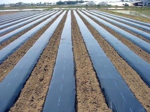 Màng phủ luống đất trồng rau, màng phủ đất chắn cỏ loại dày, màng nilon dùng trong nông nghiệp