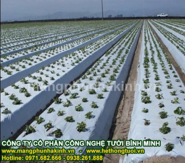 Màng phủ nông nghiệp Bình Minh,cách sử dụng màng phủ nông nghiệp,lợi ích màng phủ nông nghiệp