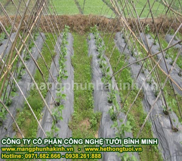 Màng phủ nông nghiệp, cách sử dụng màng phủ nông nghiệp, đại lý màng phủ nông nghiệp