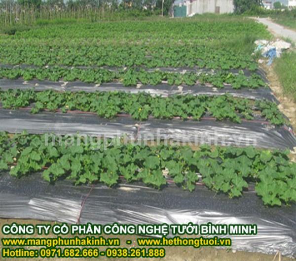 màng phủ nông nghiệp hà nội, báo giá màng phủ nông nghiệp, giá bạt phủ nông nghiệp
