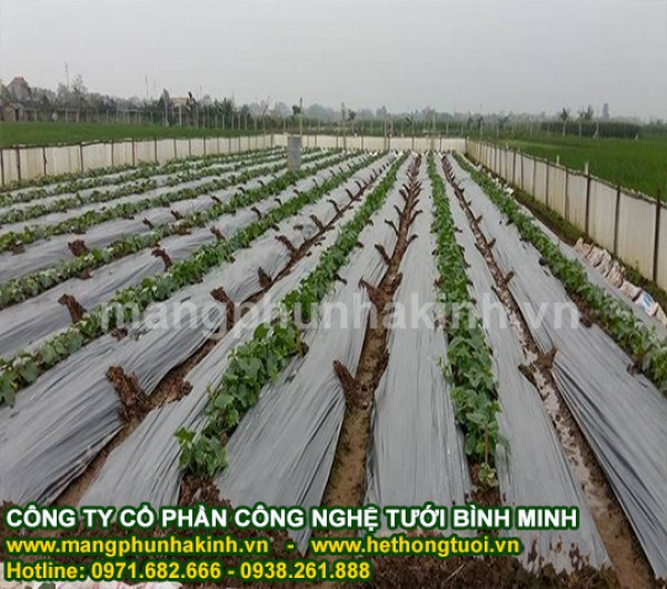 màng phủ nông nghiệp, màng phủ 1.2m x400, màng phủ 1.4m x400, màng phủ 1.8m x400